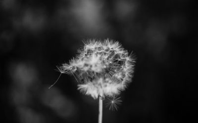 Wishes: a poem